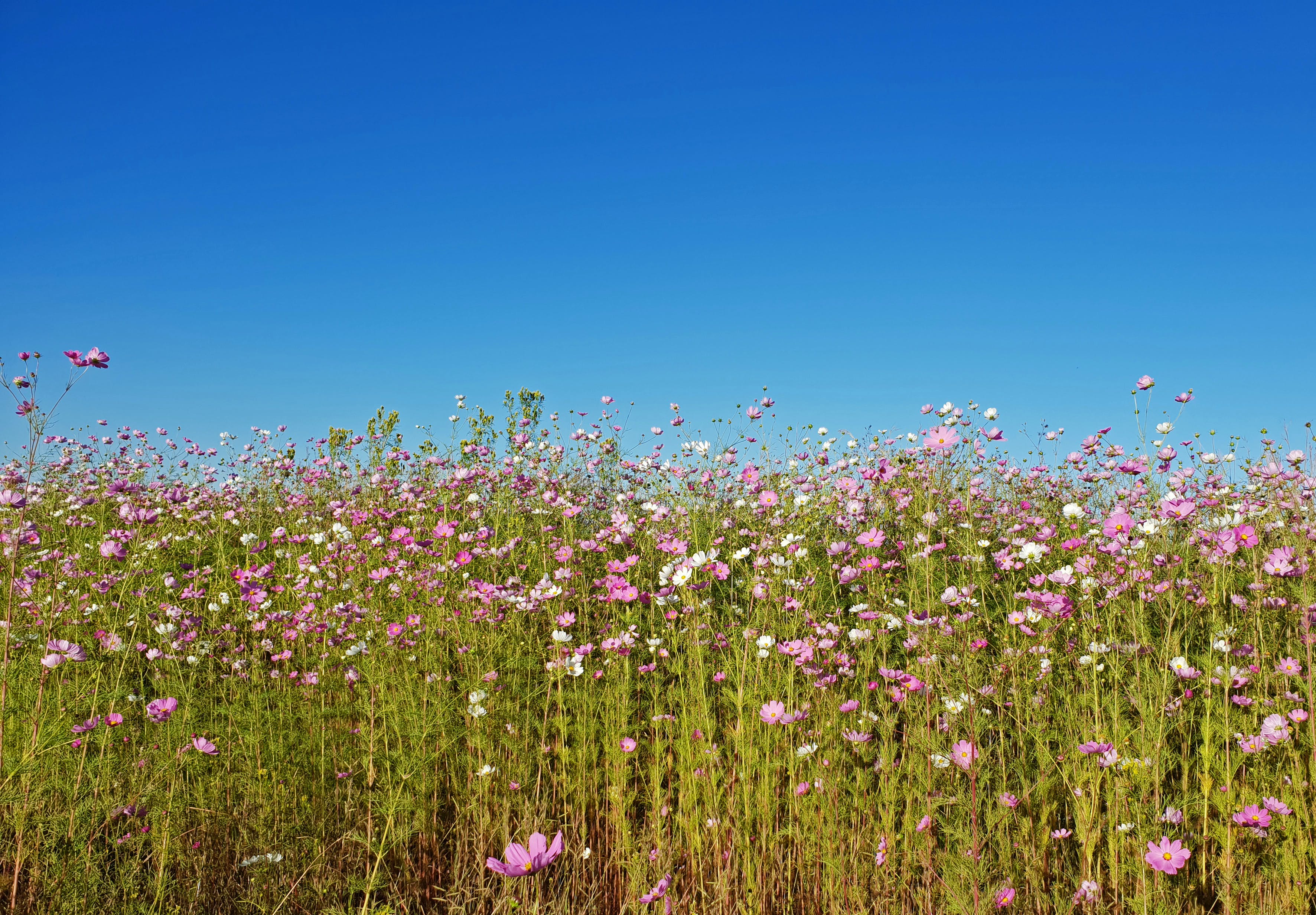 Photography of Flowers Under Clear Sky