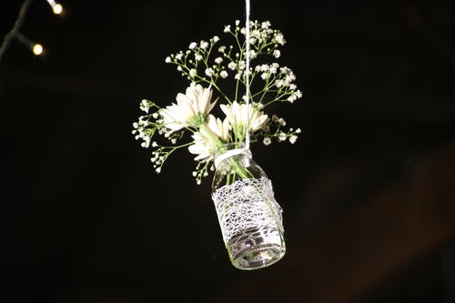 Gratis lagerfoto af blomster, blomstrende, close-up, dekoration