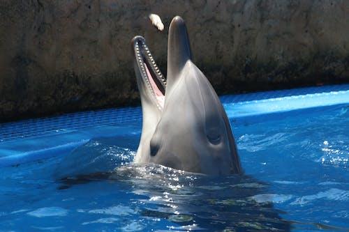 Безкоштовне стокове фото на тему «акваріум, веселий, вода, дельфін»