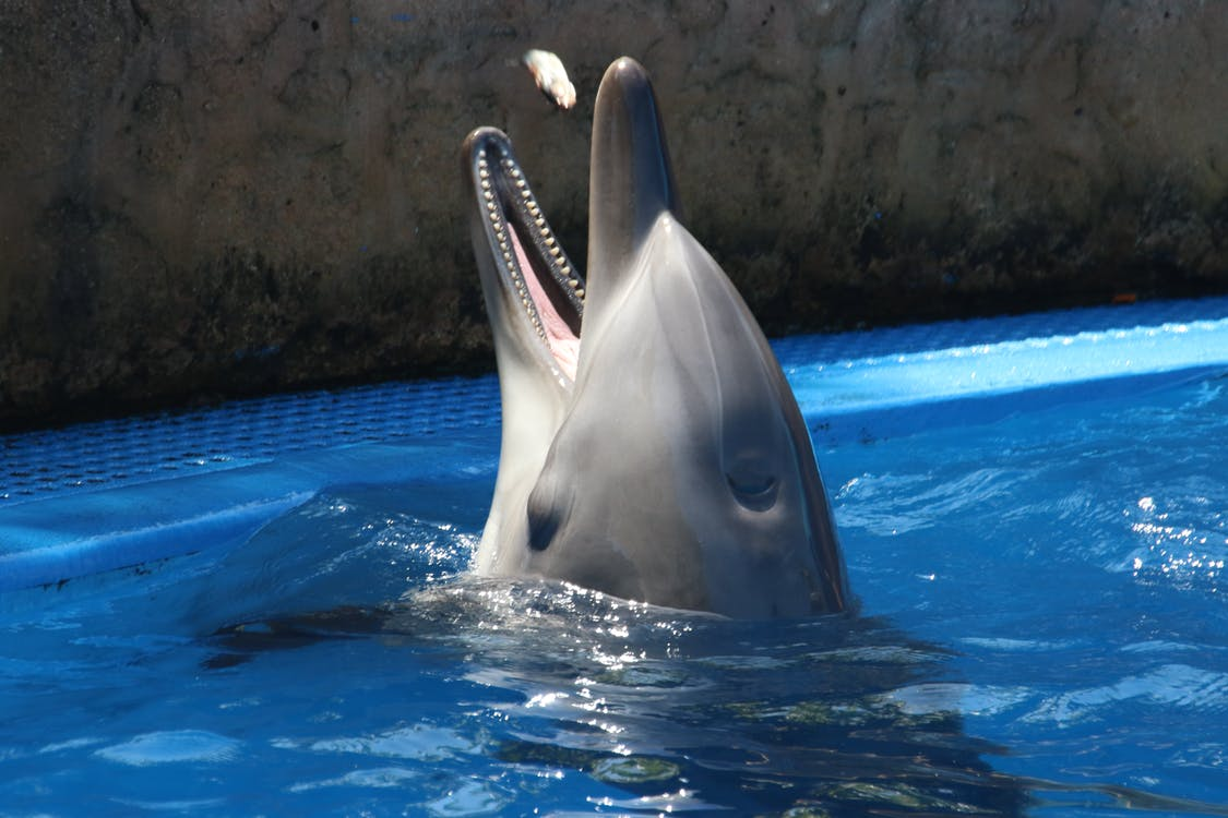 akwarium, basen, delfin