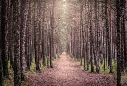 Základová fotografie zdarma na téma borovice, děsivý, hluboký, les