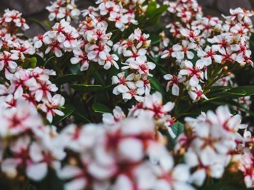 Selective Focus Photo of Jasmine Flowers in Bloom