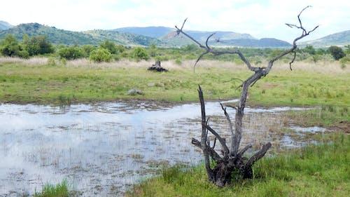 Základová fotografie zdarma na téma fotografie přírody, matka příroda, rezervace