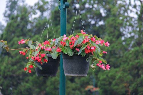 Gratis stockfoto met bloemen, bunga, natur, taman
