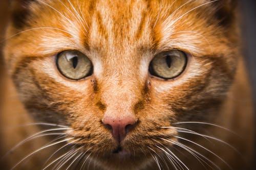 動物, 寵物, 小貓, 貓 的 免費圖庫相片