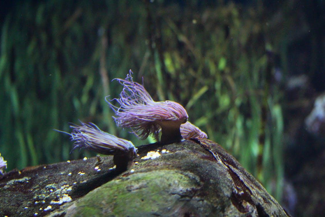 aquarium, wasser