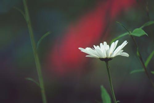 Darmowe zdjęcie z galerii z biały, flora, jasny, kolor