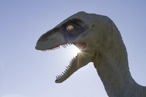 Darmowe zdjęcie z galerii z dinozaur, posąg, słońce