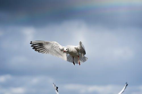 Imagine de stoc gratuită din animal, apă, aviar