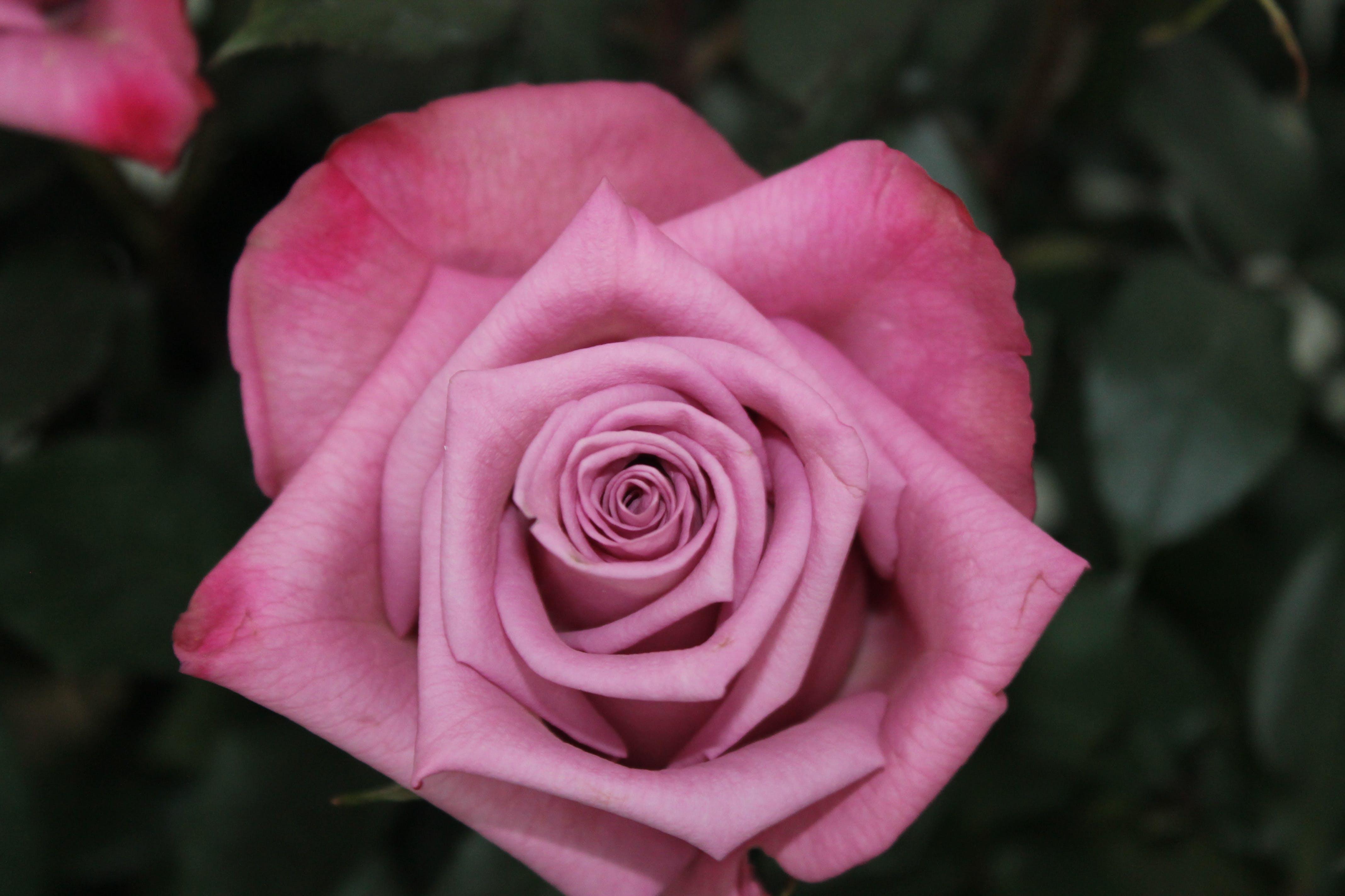꽃이 피는, 식물군의 무료 스톡 사진