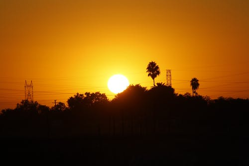 güç hatları, Güneş, Palmiye ağaçları içeren Ücretsiz stok fotoğraf