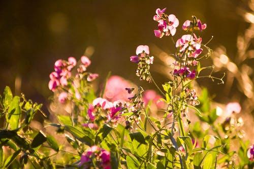 Darmowe zdjęcie z galerii z fioletowe kwiaty