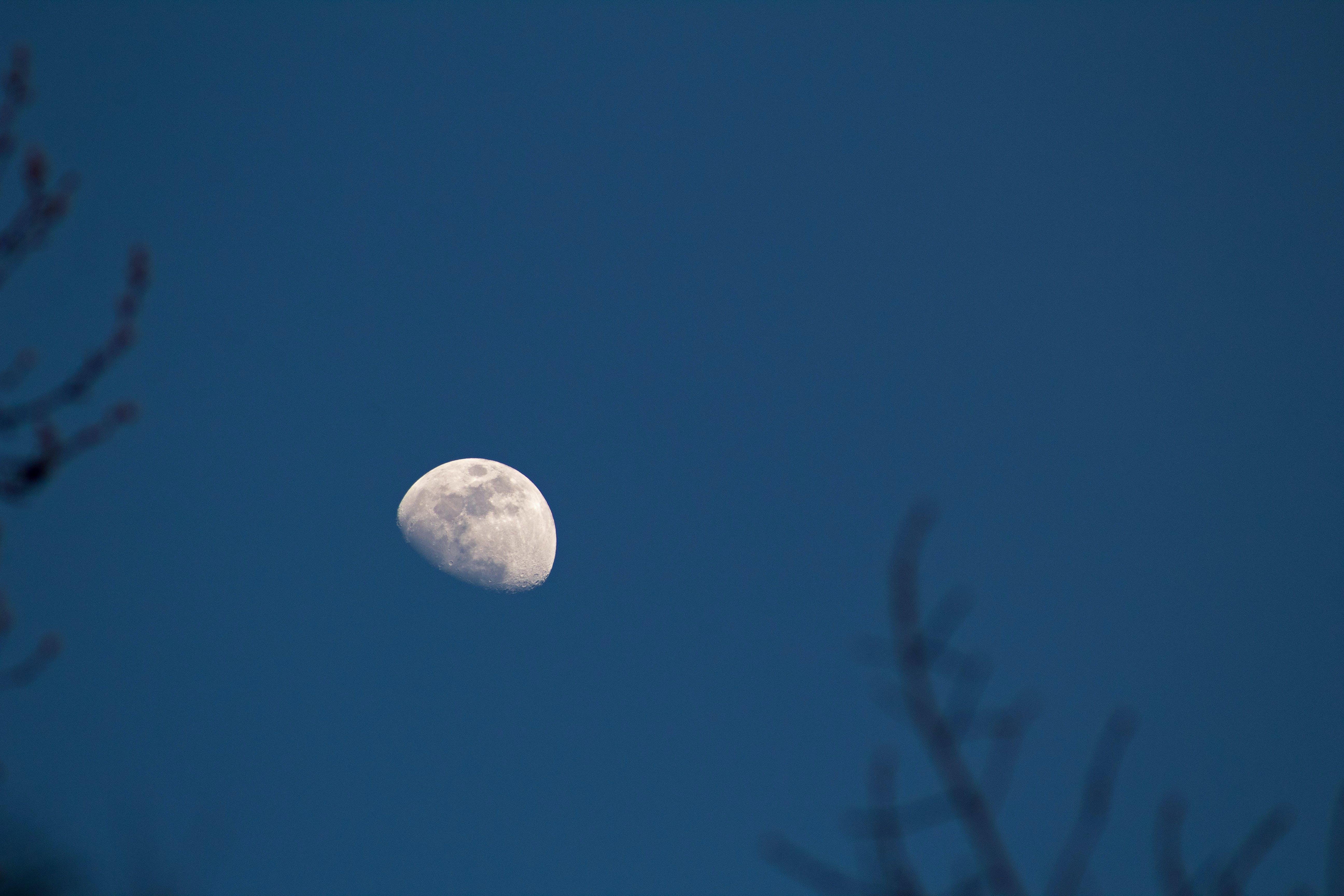 Free stock photo of dusk, moon