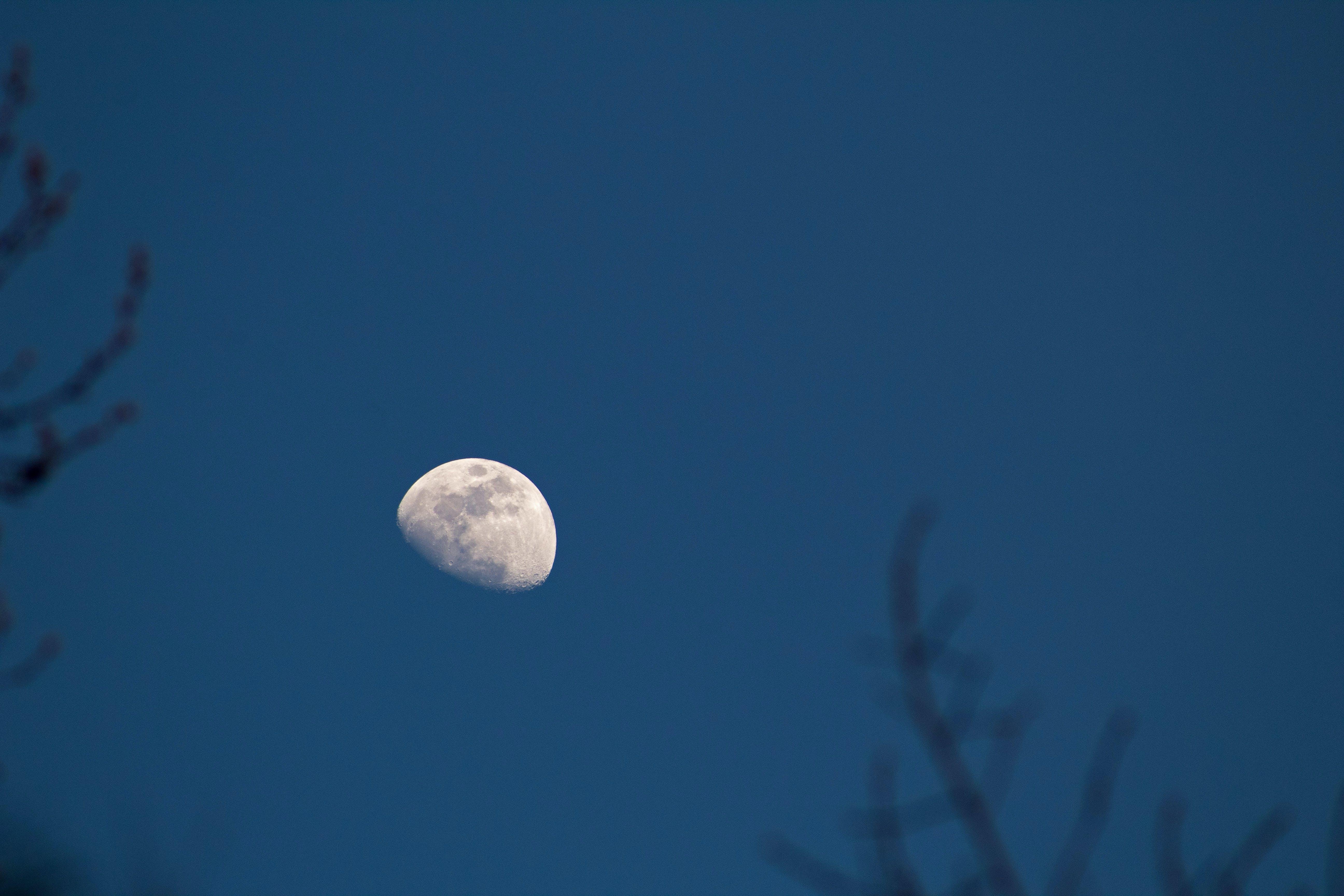 Free stock photo of moon, dusk