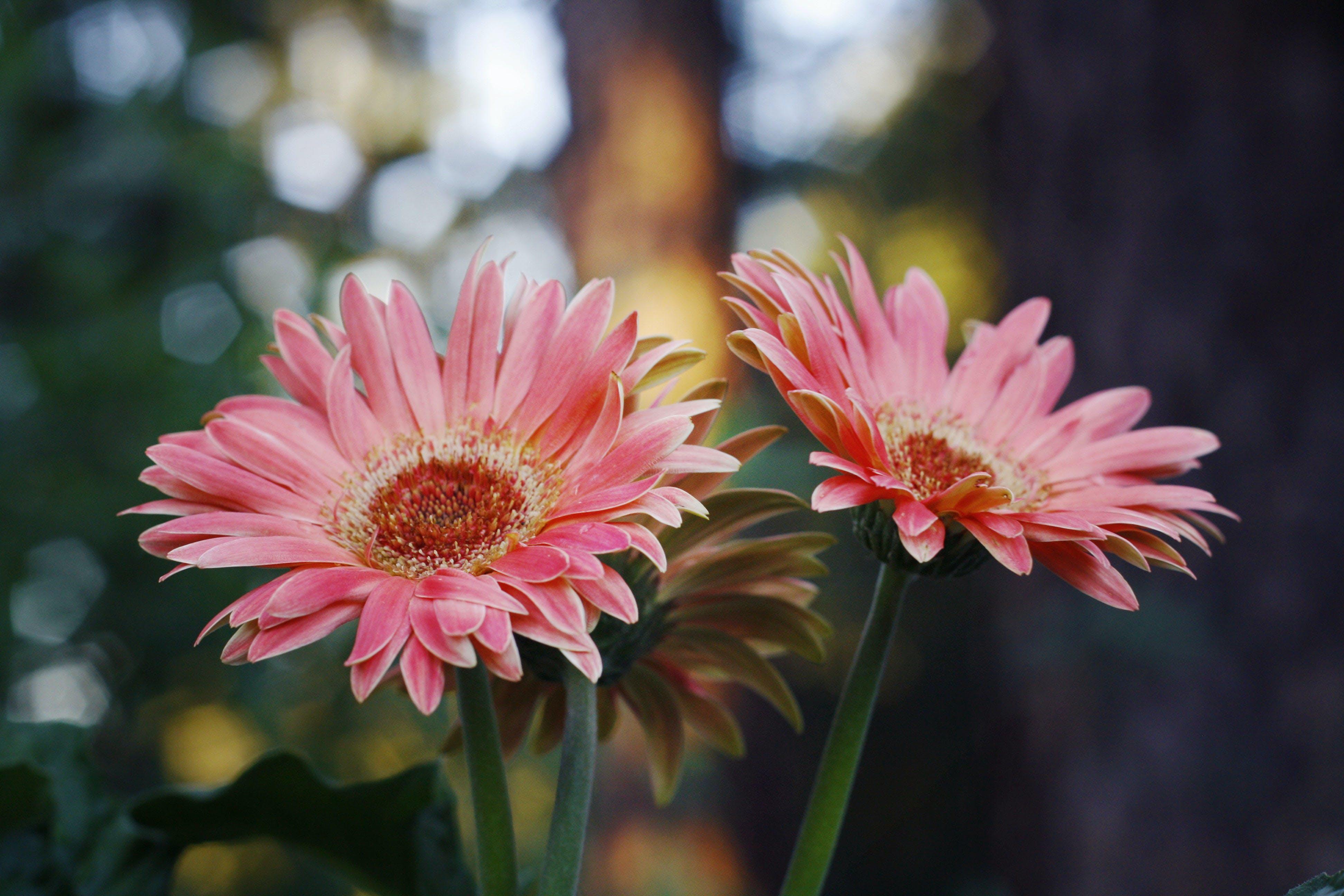 Gratis arkivbilde med blomst, blomsterblad, farge, flora