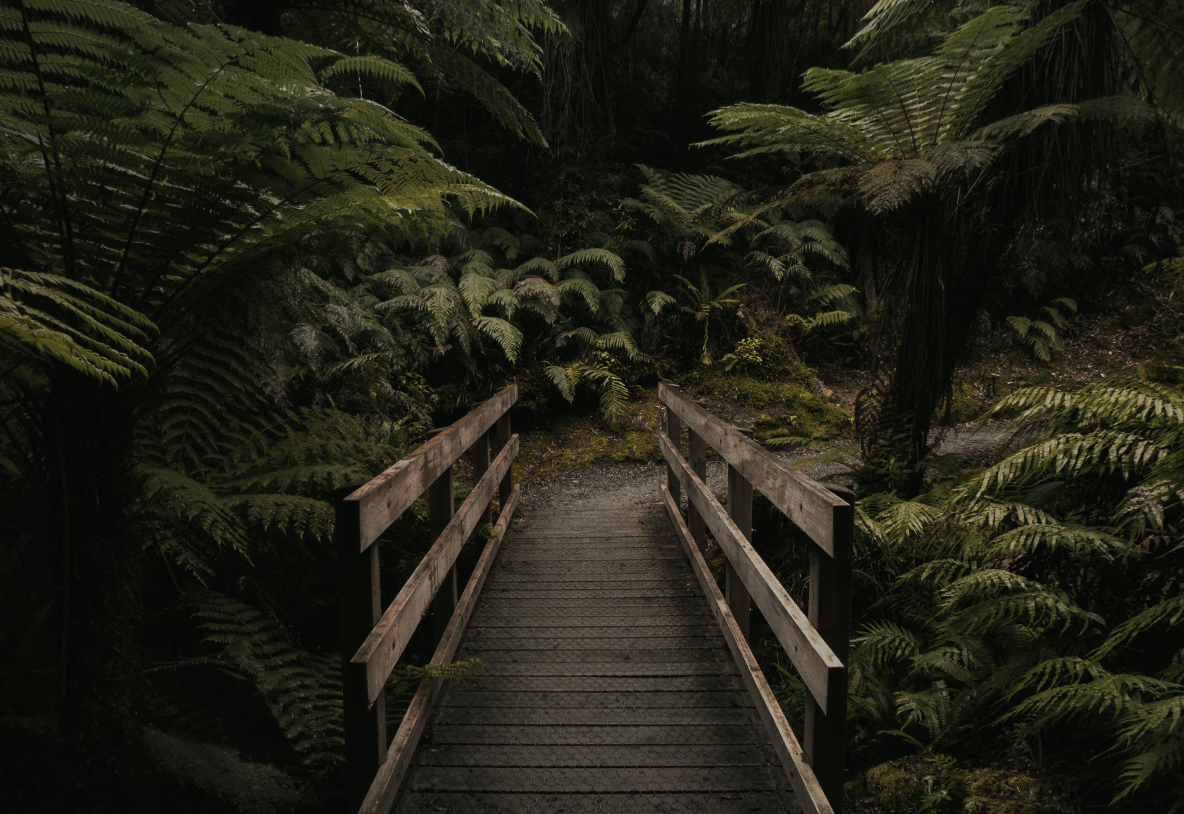 Brown Wooden Bridge Near Forest
