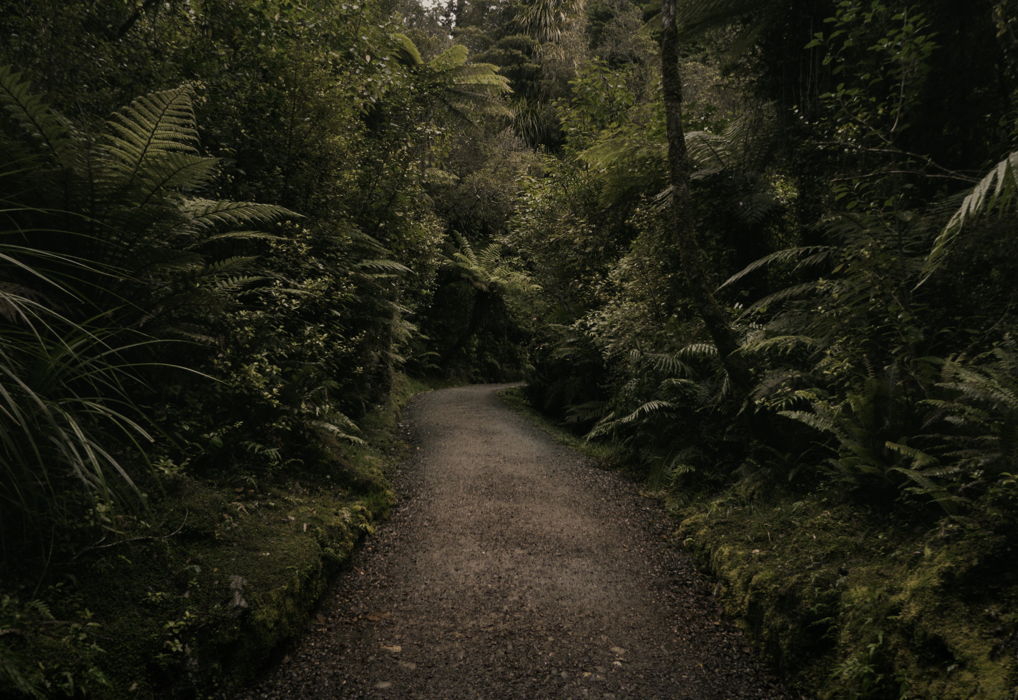 Free stock photo of nature, dark, forest, path