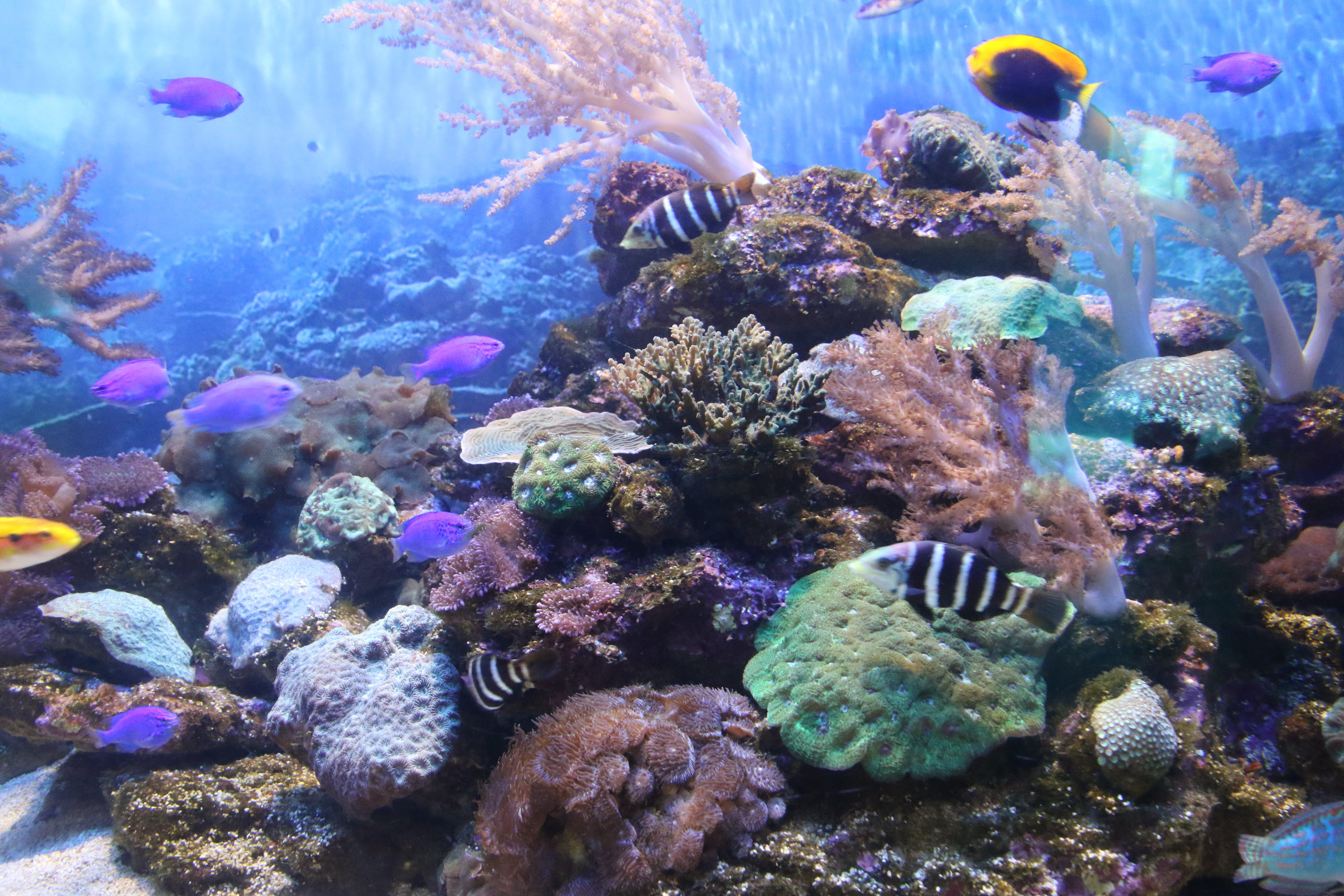 Free stock photo of sea, ocean, animal, fish