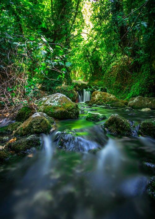 Fotos de stock gratuitas de agua corriendo, bosque de arboles, cascada
