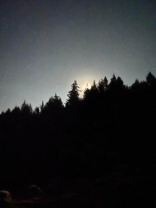 Free stock photo of moon, nature, night sky