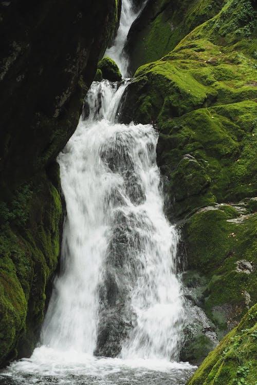 Fotobanka sbezplatnými fotkami na tému cestovať, čistota, dažďový prales