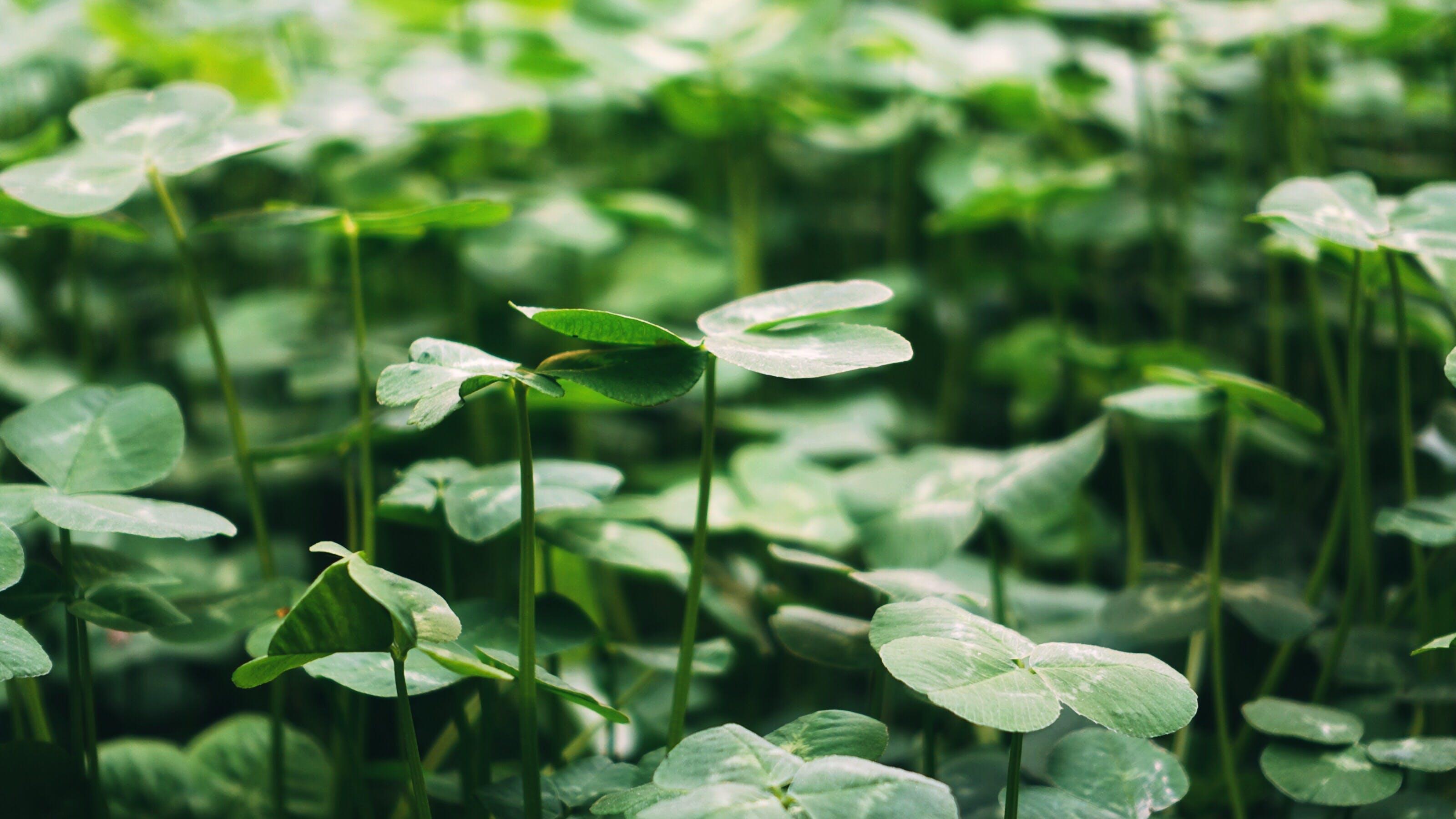 Kostenloses Stock Foto zu grün