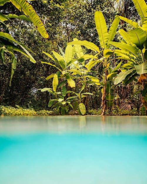 Photos gratuites de arbre, complexe, complexe hôtelier
