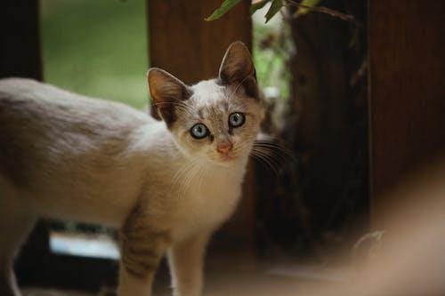 Foto profissional grátis de adotado, amantes do gato, animais domésticos