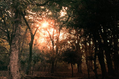 Free stock photo of golden sun, light and dark, trees