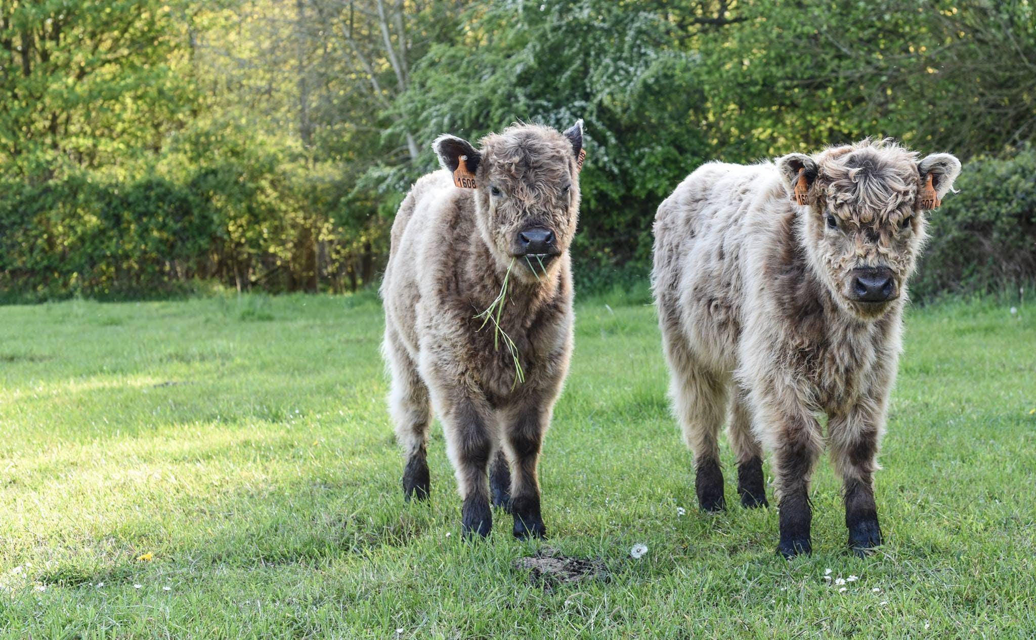 2 Cub on Green Grass Field