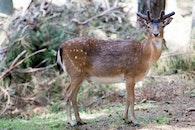 nature, animal, deer