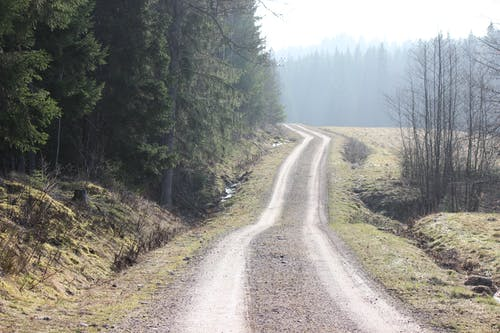 Photo Of Road And Trees