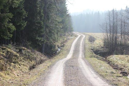 Gratis stockfoto met bomen, Bos, daglicht, mist