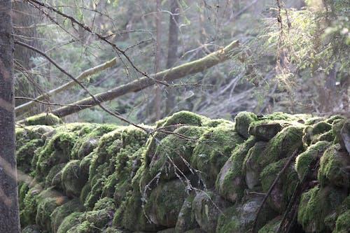 Free stock photo of mossy rocks, stone wall