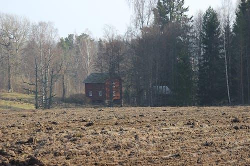 Free stock photo of farmland, field