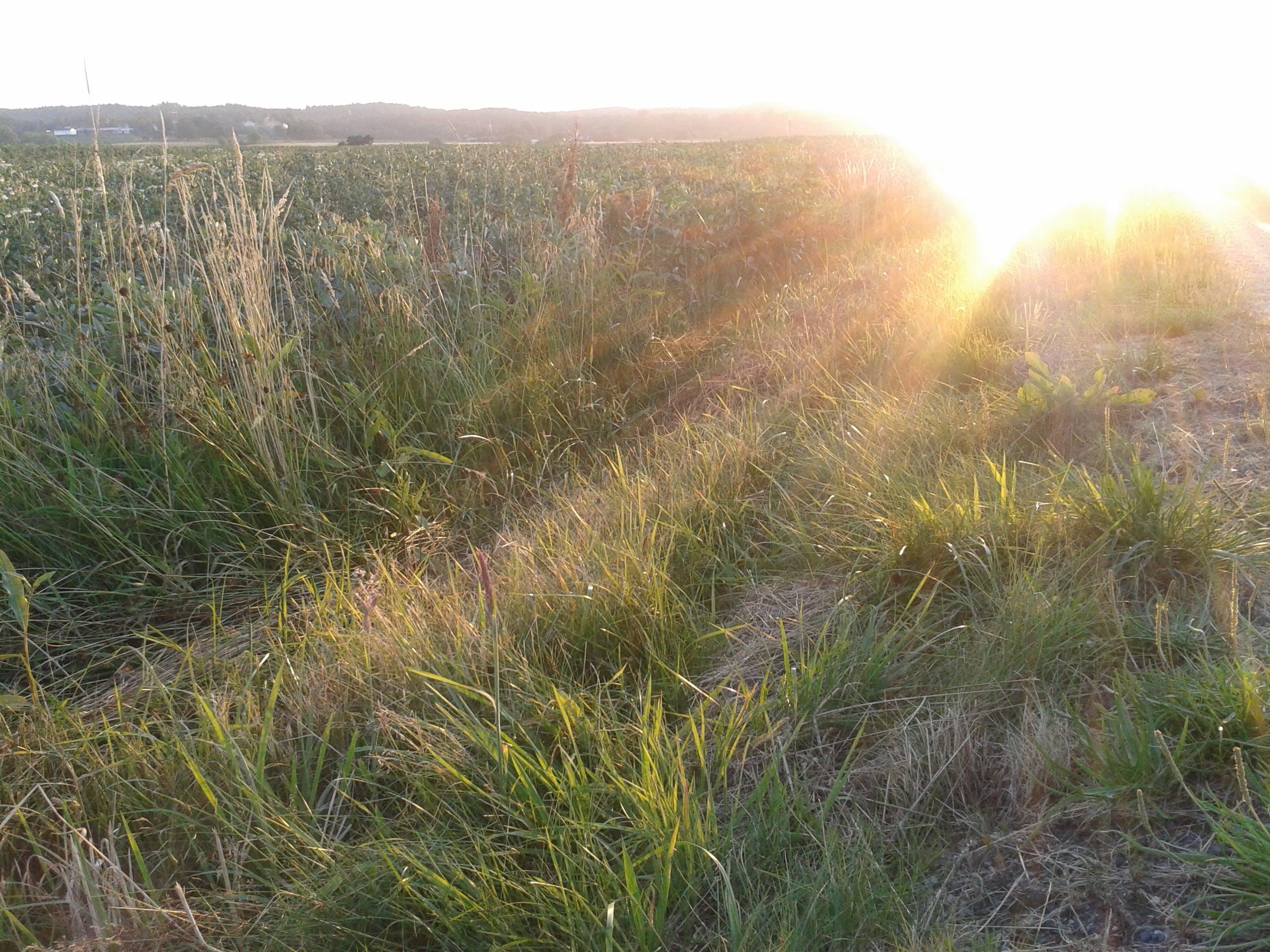 Free stock photo of field, landscape, summer