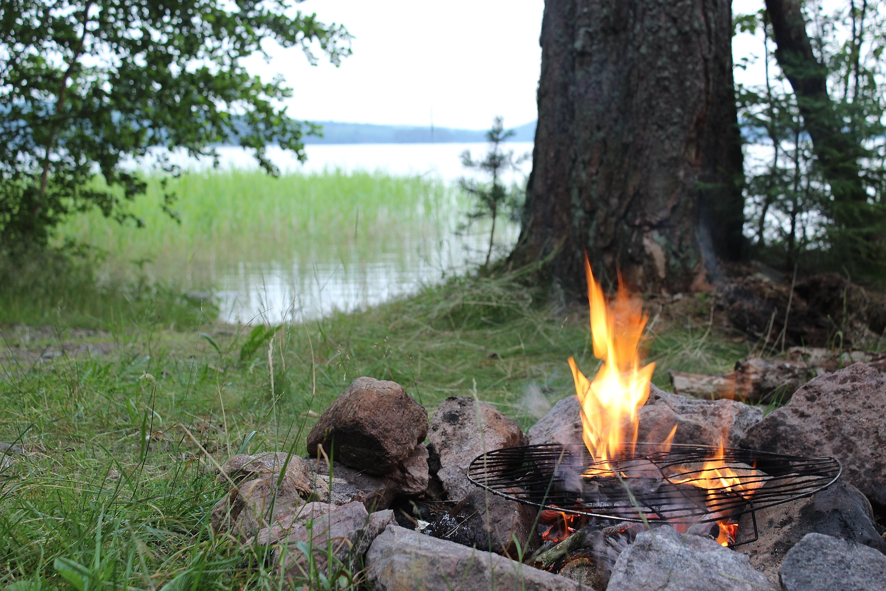 Free stock photo of campfire, summer