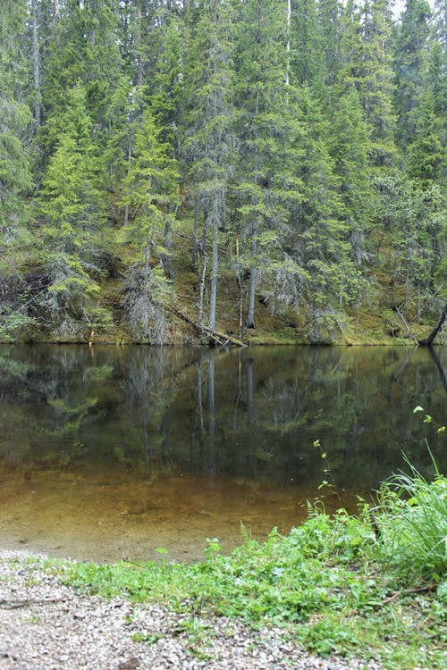Free stock photo of forest, tarn