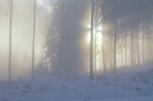 Gratis stockfoto met bomen, Bos, sneeuw