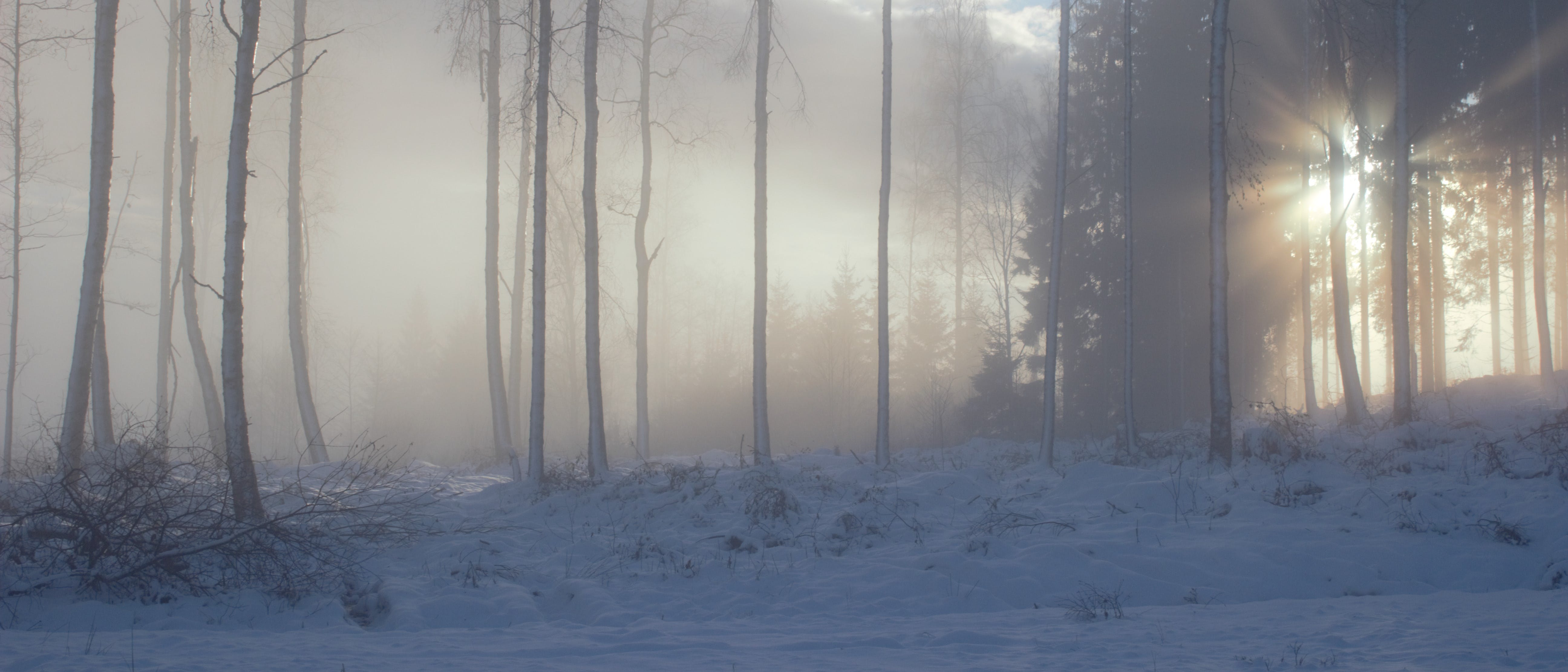 Free stock photo of forest, trees, winter