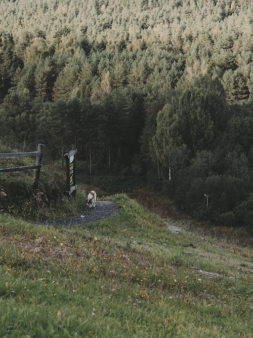 Kostenloses Stock Foto zu bauernhof, baum, berg