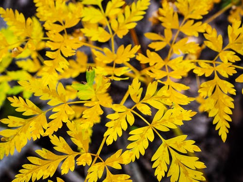 Free stock photo of autumn, autumn colors, autumn forest