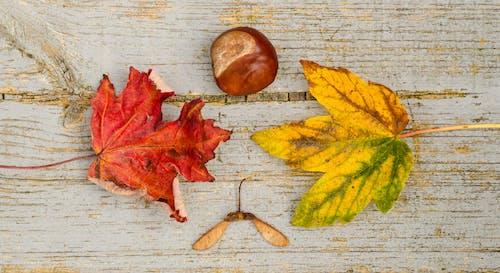 Gratis lagerfoto af farver, farverig, sæson, træ