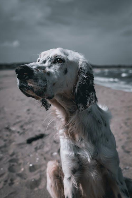 bakmak, Evcil Hayvan, genç içeren Ücretsiz stok fotoğraf