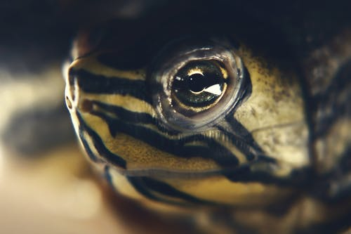 Photos gratuites de tortue