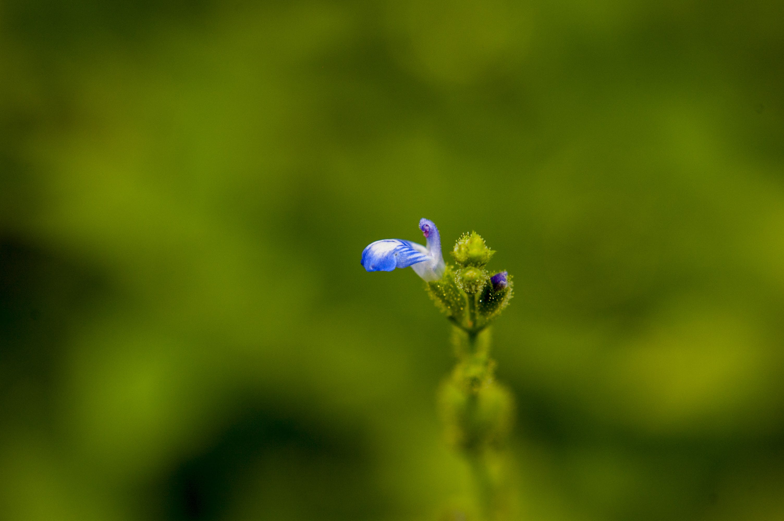 Free stock photo of flor, macro, natural