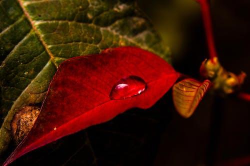 マクロ, 水滴, 閉じるの無料の写真素材