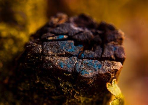 Kostnadsfri bild av rock