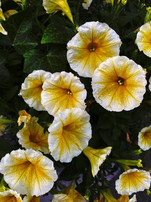 Gratis stockfoto met bed, blad, bloei gele bloemen