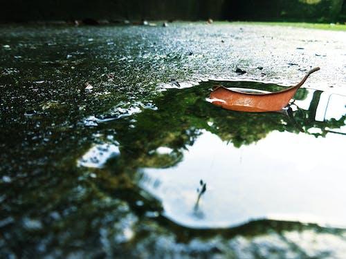 Δωρεάν στοκ φωτογραφιών με αποξηραμένο φύλλο, μετά τη βροχή